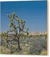Joshua Trees Number 339 Wood Print