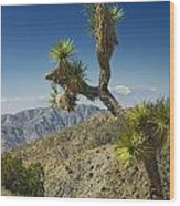 Joshua Trees Number 357 Wood Print