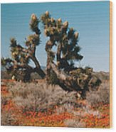 Joshuaa Tree In The Poppies Wood Print