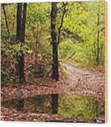 Josie's Brook Trail Wood Print