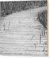 Journey Of Soles Wood Print by Luke Moore