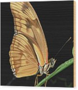 Julia Butterfly Dryas Iulia Portrait Wood Print