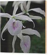 Julie's Orchid Wood Print
