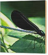July Dragonfly II Wood Print