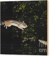 Jumping Chipmunk Wood Print