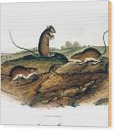 Jumping Mouse, 1846 Wood Print