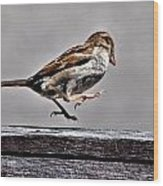 Jumping Sparrow Wood Print