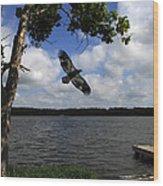 Junenile Eagle Rocky Fork Lake Wood Print