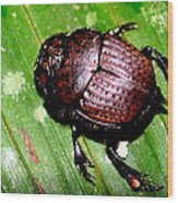 Jungle Beetle Wood Print