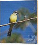 Jungle Flycatcher Wood Print