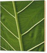 Jungle Leaf Wood Print