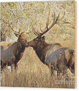 Junior Meets Bull Elk Wood Print by Robert Frederick