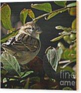 Junior Sparrow Wood Print