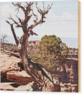 Juniper - Colorado National Monument Wood Print