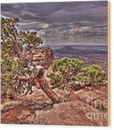 Junipers Storm Wood Print by John Kelly