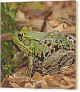 Just A Frog Wood Print