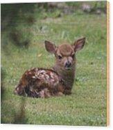 Just Born Bambi Wood Print