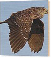 Juvenile Black Crowned Night Heron In Flight Wood Print