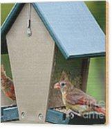 Juvenile Cardinals On Feeder Wood Print