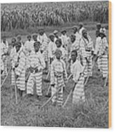 Juvenile Convicts At Work In The Fields Wood Print by Everett