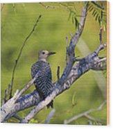 Juvenile Golden-fronted Woodpecker Wood Print