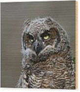 Juvenile Great Horned Owl Wood Print