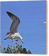 Juvenile Herring Gull Wood Print