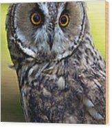 Juvenile Long Eared Owl Wood Print