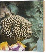 Juvenile Map Pufferfish Wood Print