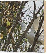 Juvenile Snowy Egret Wood Print