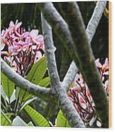 Kalachuchi Flowers Wood Print