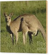 Kangaroo Male Wood Print by Bob Christopher