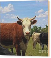 Kansas Country Cow's With Blue Sky And Grass Wood Print