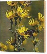 Kansas Monarchs Wood Print
