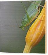 Katydid Wood Print