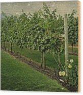 Kelowna Vineyard Wood Print