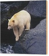 Kermode Bear On Boulder Hunting Salmon Wood Print