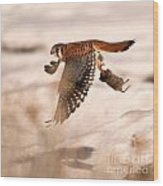 Kestral In Flight Wood Print