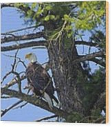 Kettle River Eagle 2012 Wood Print