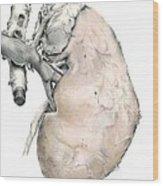 Kidney Anatomy, Artwork Wood Print