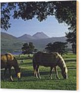 Killarney,co Kerry,irelandtwo Horses Wood Print