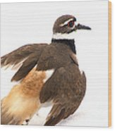 Killdeer - Show Off In The Spring Snow  Wood Print