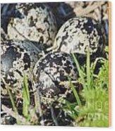 Killdeer Eggs Wood Print by Lynda Dawson-Youngclaus