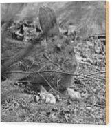 King Hare Wood Print