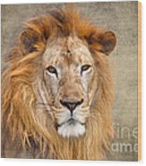 King Of Beasts Portrait Of A Lion Wood Print