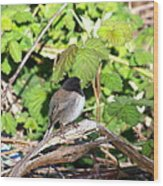 King Of The Blackberry Brier Wood Print