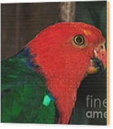 King Parrot - Male 2 Wood Print