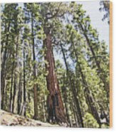 Kings Canyon National Park Wood Print