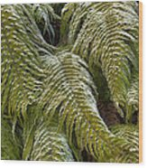 Kiokio Blechnum Novae-zelandiae Covered Wood Print