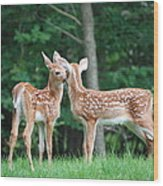 Kiss Me Deer Wood Print